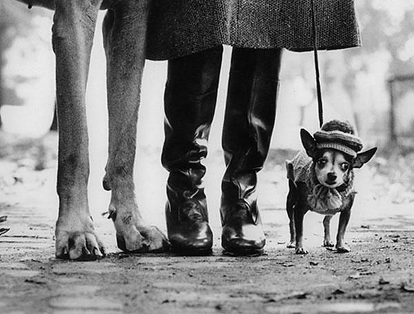 New York, 1954, Elliott Erwitt